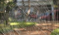 Spirder Web 1