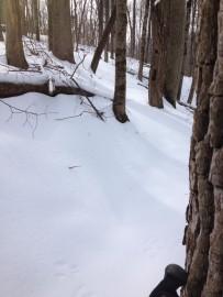 Where's the trail?