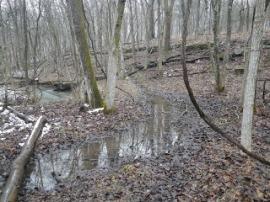 Trail Run Mud