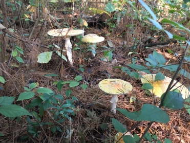 T Creek Mushroom 3